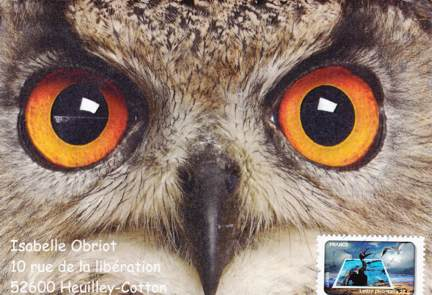 les yeux du hibou