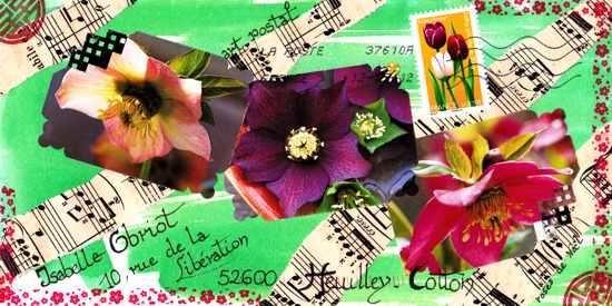 Roses de noël en musique