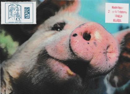 Piggy 08 05 18