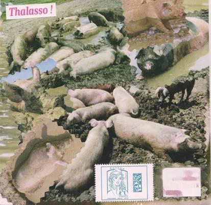 Piggy 19.09.16