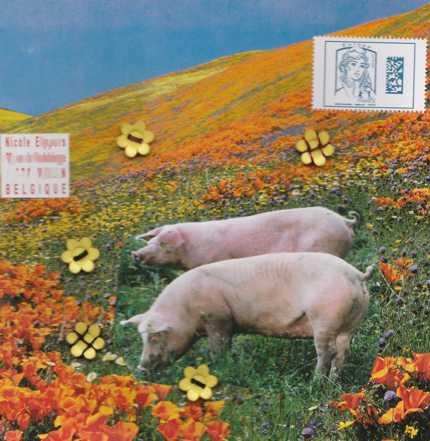Piggy 20 08 18